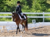 Foshay South Dressage Show 2015